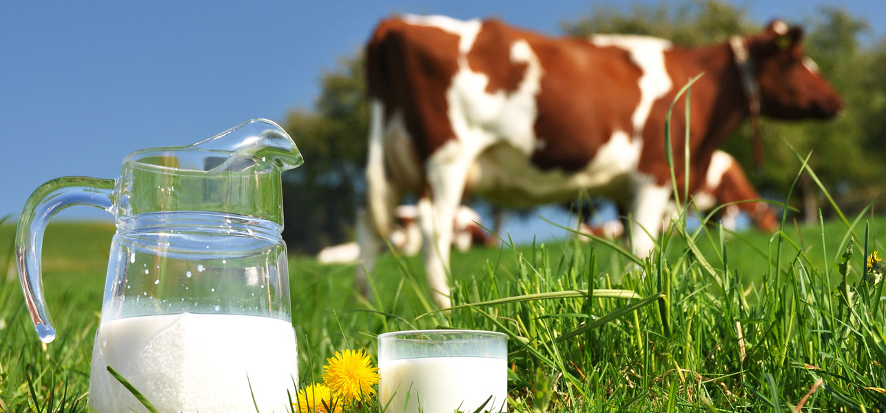 Benefits-Of-Cow-Milk-According-To-Ayurveda0