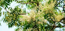 The-Goodness-Of-Neem-