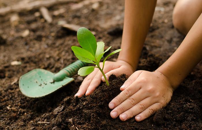 To-Fertilize-Plants