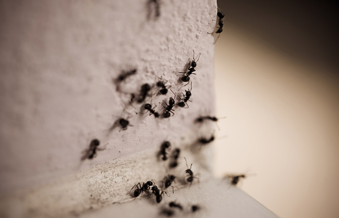 To-Get-Rid-Of-Those-Pesky-Ants