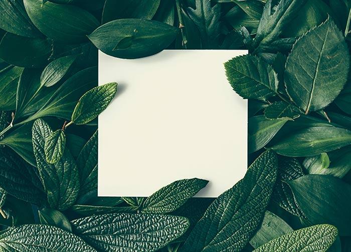 #9 Plants Communicate
