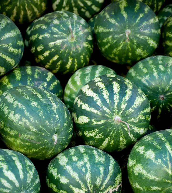 How To Pick A Perfect Watermelon: Tips From An Experienced Farmer