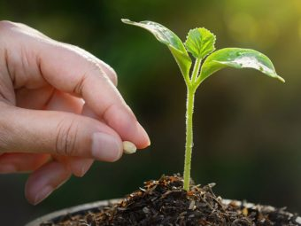 Developing Ayurvedic Awareness Stop Throwing Away Seeds!