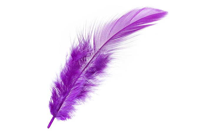 2. The Purple Feather