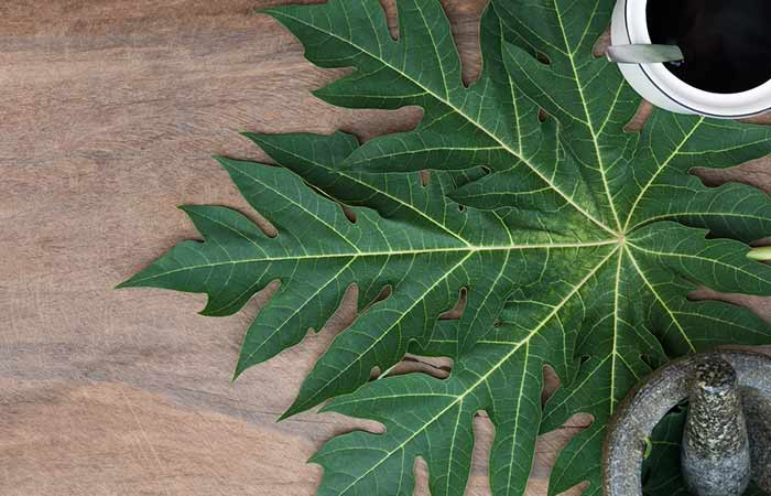 home remedies for dengue fever - Papaya Leaf Juice