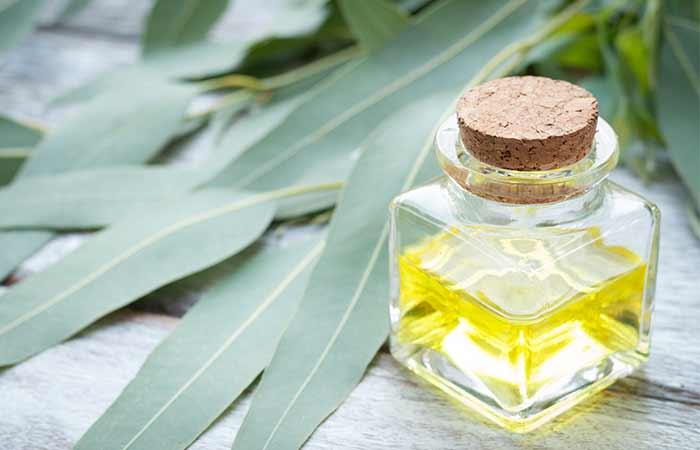 Essential Oils For Sinus Infections - Eucalyptus Oil