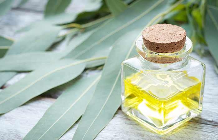 Essential Oils For Sinus Infections - Eucalyptus Oil