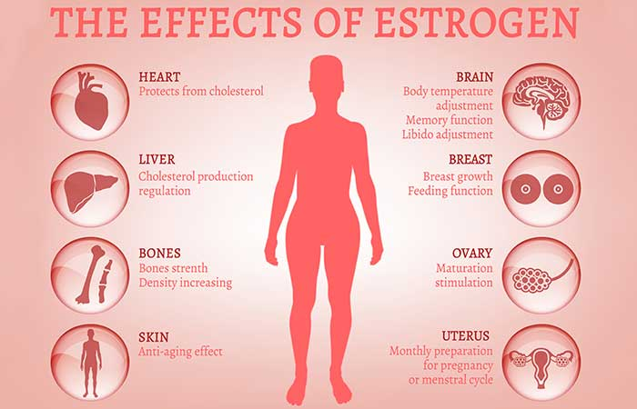 10 Signs That Your Body Has Too Much Estrogen, Which Can Lead To Weight Gain!