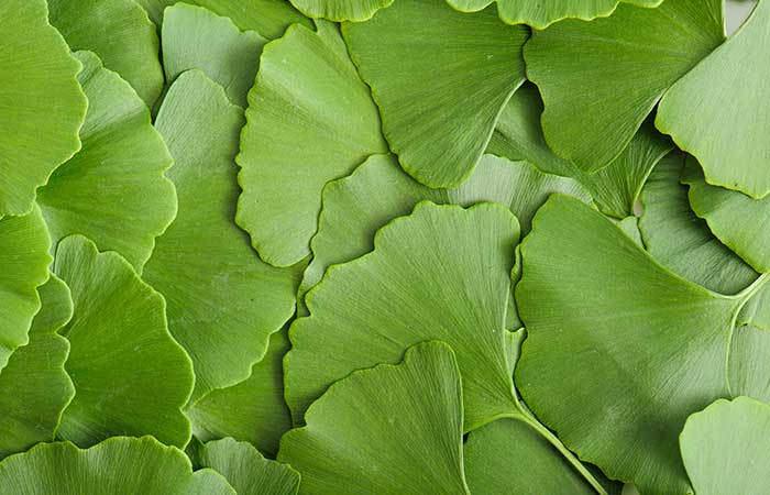 Lyme Disease - Ginkgo Biloba Supplements