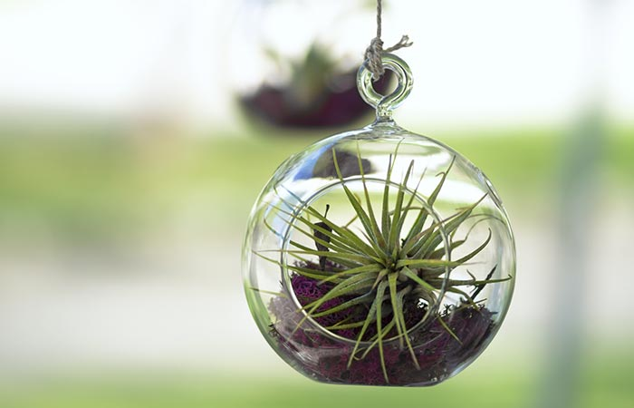 How To Get Rid Of Smoke Smell From Your House - Air Plants