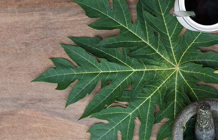 4. Papaya Leaves