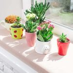 12 Plants That Help In Creating A Positive Environment In Your Home
