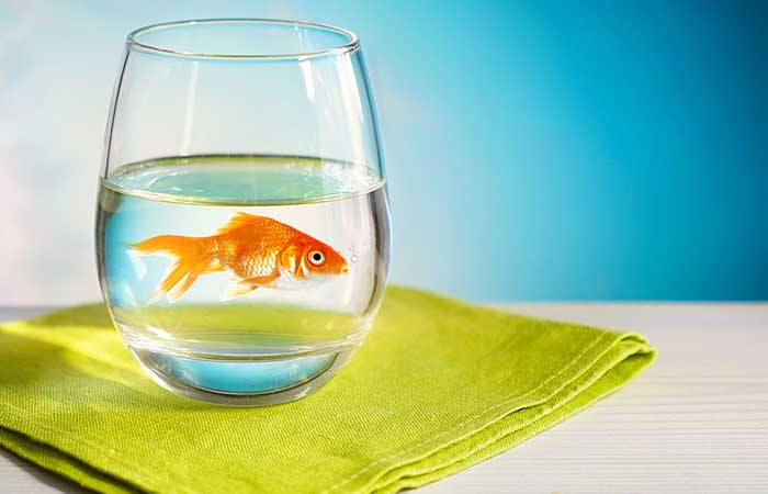 Step One To Having Your Own Brewery At Home – Get A Goldfish!