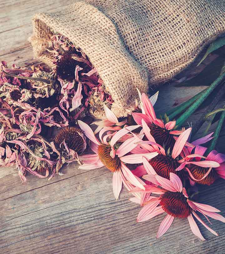 Benefits Of Echinacea And How To Make Echinacea Tea