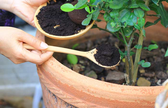 3. Coffee Compost And Fertilizer