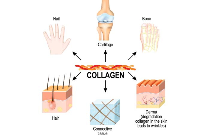Why Do You Need Collagen