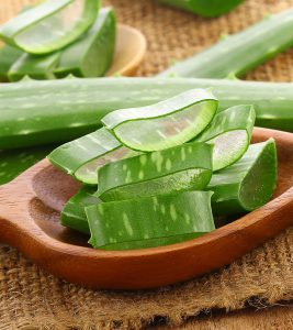 All About Aloe Vera