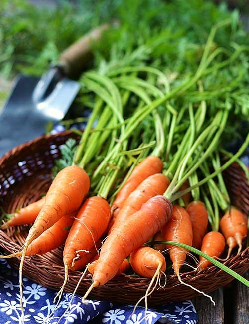 Carrots – PRAL Score -4.9