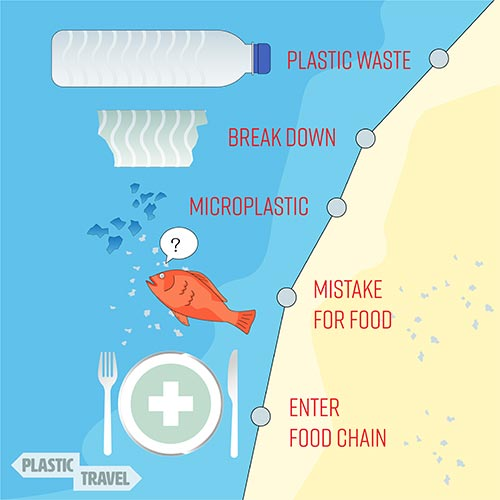 How Do Microplastics Enter The Human Ecosystem