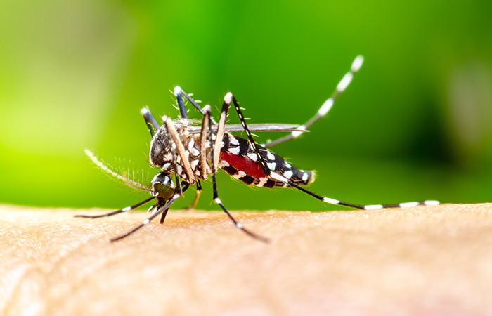 Symptoms of Chikungunya in Hindi