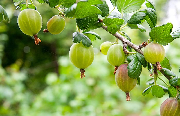 Gooseberry for High BP in Hindi