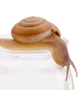 Top 10 Snail Creams – 2019