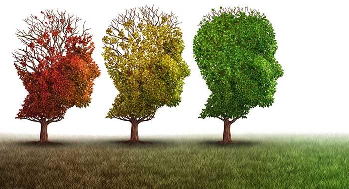 12.-मस्तिष्क-स्वास्थ्य