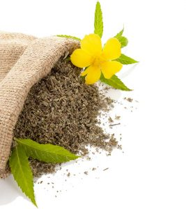 3 Principal Benefits You Get From Damiana Leaf – The Safest Aphrodisiac