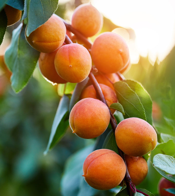 Apricot (Khubani) Benefits, Uses and Side Effects in Hindi.jpg