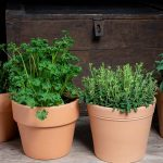 Plants You Can Easily Grow In Your Kitchen