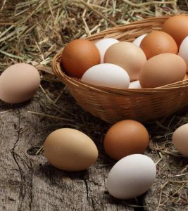 All About Eggs in Hindi