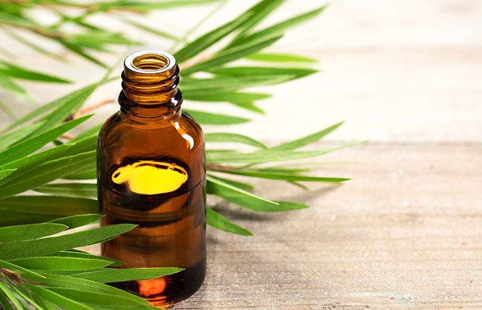 Tea Tree Oil for Bed Bugs in Hindi