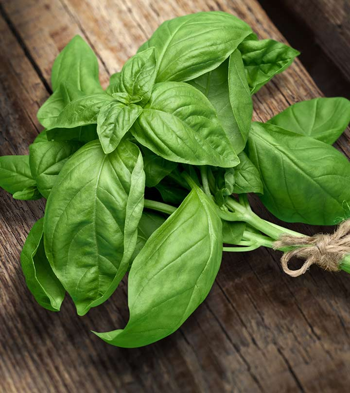 Basil Benefits, Uses and Side Effects in Hindi