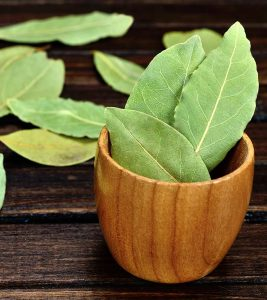 Bay Leaf (Tej Patta) Benefits, Uses and Side Effects in Hindi