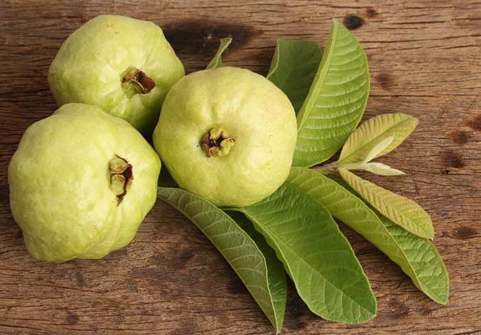 How to store Guava in Hindi