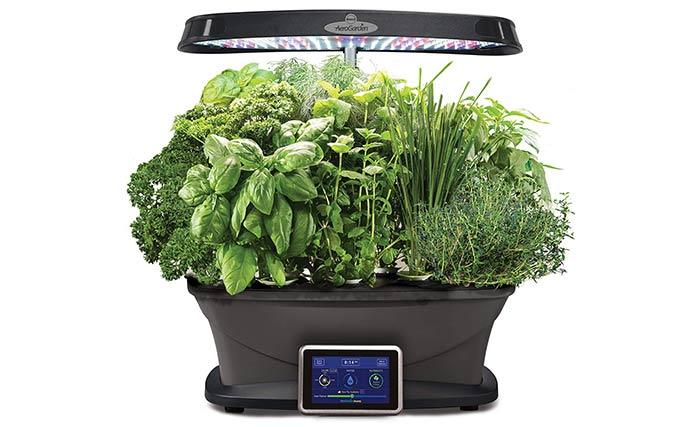 Gourmet Herb Seed Pod Kit