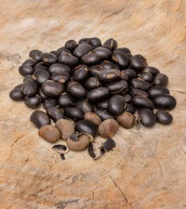 Kaunch Beej (Mucuna Pruriens) Benefits and Side Effects in Hindi