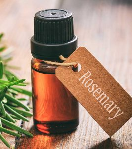 Rosemary Benefits, Uses and Side Effects in Hindi