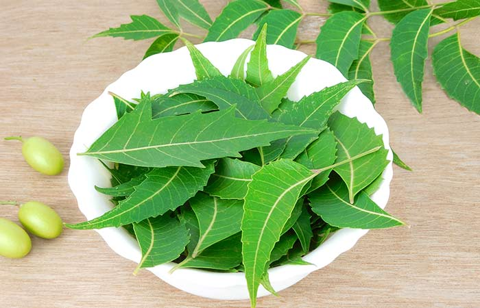 Leaves of the Neem tree for Dengue in hindi