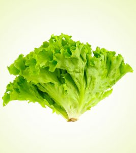 Lettuce Benefits Uses and Side Effects in Hindi