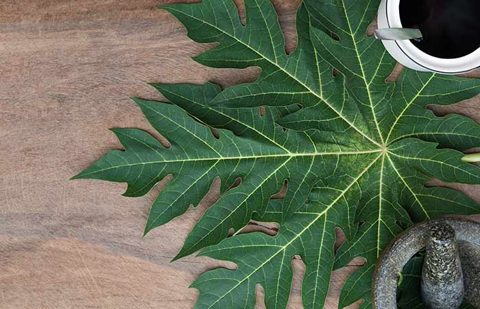 Papaya leaves for Dengue in hindi