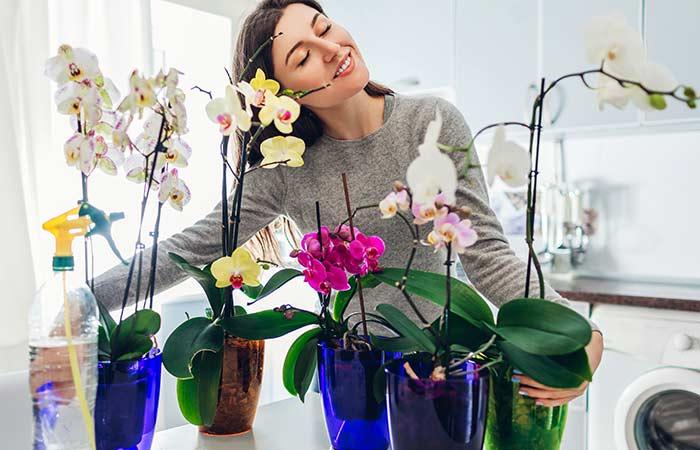 4. Orchids