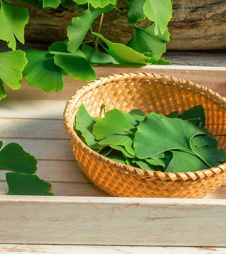 Ginkgo Biloba Benefits, Uses and Side Effects in Hindi