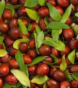 Jujube Fruit (Ber) Benefits Uses and Side Effects in Hindi