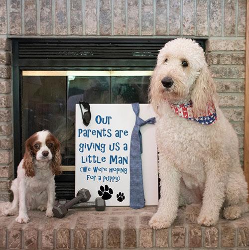 Pet Photo Reveal