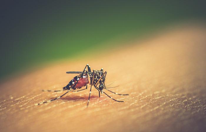 Dengue and Chikungunya
