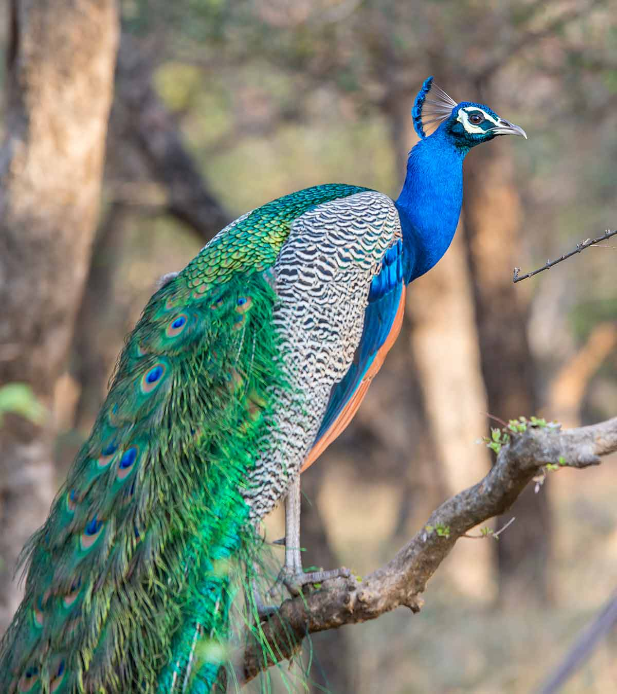 Indian National Parks: 7 Indian National Parks You Should Visit On Your Next Vacation