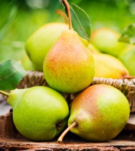 Pears (Nashpati) Benefits and Side Effects in Hindi