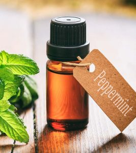 Peppermint Oil Benefits and Side Effects in Hindi