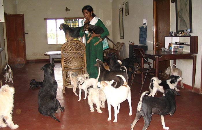 Rescued From Euthanasia & Abuse, Woman Gives 800+ Animals A Retirement Home!